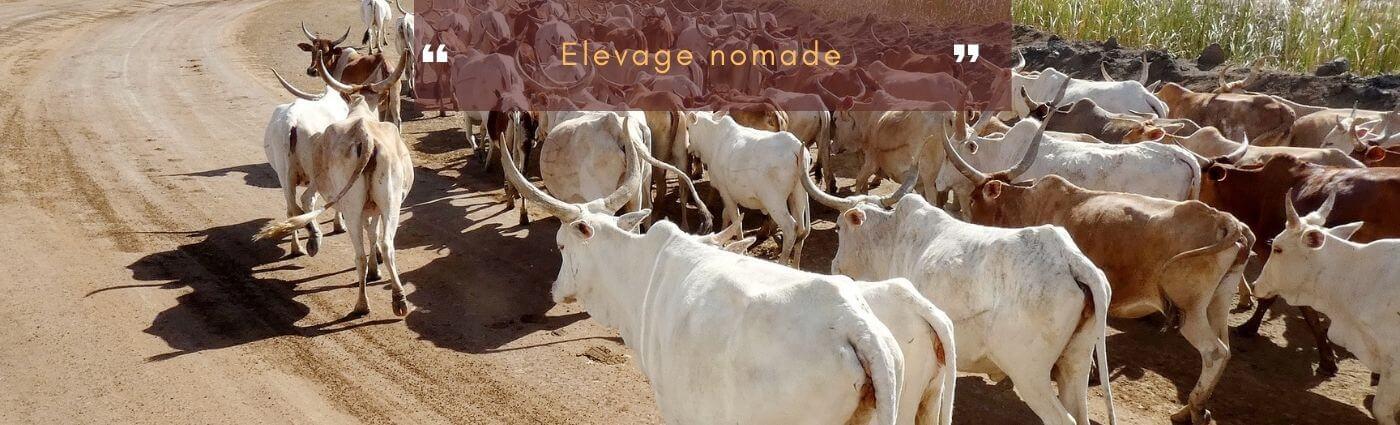 élevage nomade bovin