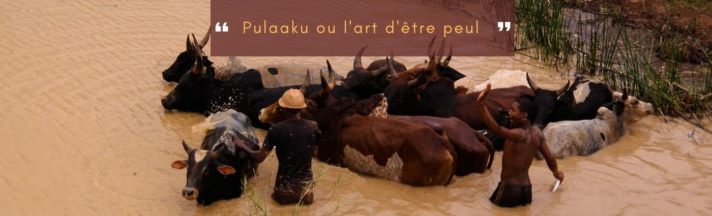 pulaaku ou l'art d'être peul