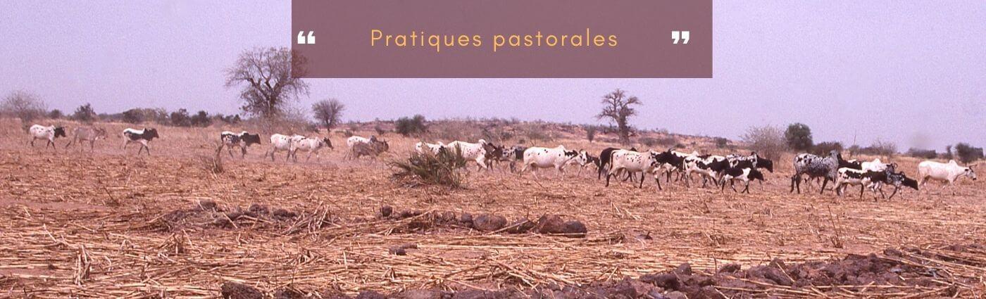 pratiques pastorales