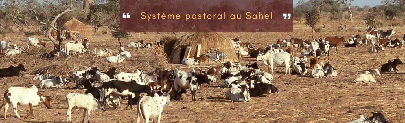 système pastoral