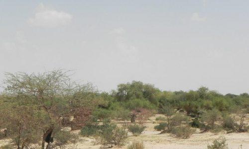 Paysage du Niger