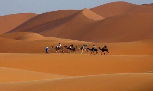 Paysage du désert