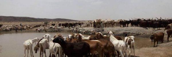 bétail-troupeau