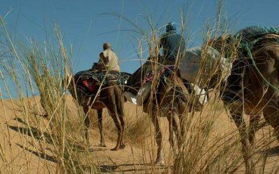 Broussailles du Sahel