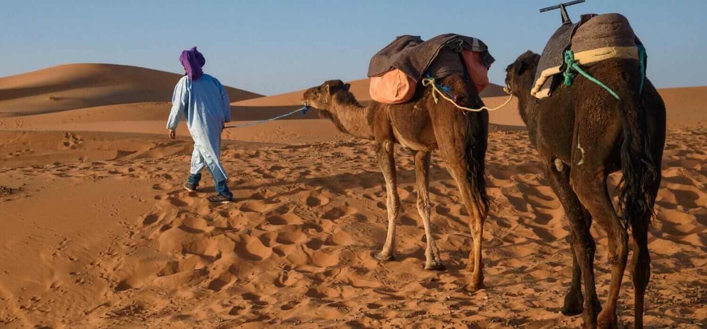 berger nomade touareg